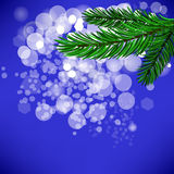 Fir Green Branch. On Blue Background Royalty Free Stock Photo