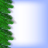 Fir Green Branches. On Blue Background Stock Photo