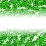 Fir Green Branches Pattern. On White Background Royalty Free Stock Photo