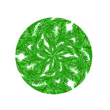Fir Green Branches Pattern. On White Background Stock Image