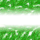 Fir Green Branches Pattern. On White Background Stock Images