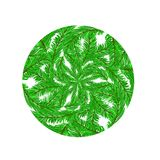 Fir Green Branches Pattern. On White Background Royalty Free Stock Photography