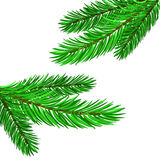 Fir Green Branches. On White Background Royalty Free Stock Image