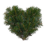 Fir heart Royalty Free Stock Image