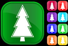 Fir icon. On shiny square buttons Stock Images