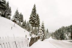 Fir landscape Stock Photography