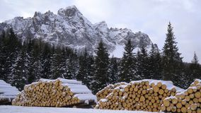 Fir logs stacked. Fir logs cut and stacked in winter stock footage