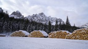 Fir logs stacked. Fir logs cut and stacked in winter stock video footage