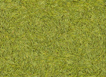 Fir needle green texture Stock Image
