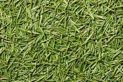 Fir-needle texture. Closeup of fir needles background stock photos