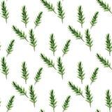 Fir pattern1. Watercolor seamless pattern. Hahd drawn fir Stock Image