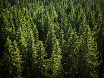 Fir peaks Royalty Free Stock Images