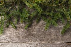 Fir or pine branches royalty free stock photography