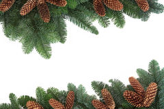 Fir and Pine Cone Border Royalty Free Stock Photos