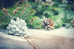 Fir and pine cone Royalty Free Stock Images