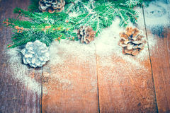 Fir and pine cone Stock Images