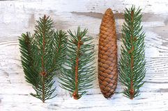 Fir and pine cones Royalty Free Stock Photography