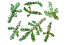 Fir pine tree branch set Stock Photos