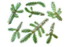 Fir pine tree branch set Stock Photos
