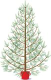Fir in pot waiting to be decorated for Christmas. On white background. Red clay pot vector illustration