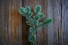 Fir real branch christmas symbol on wood royalty free stock photography