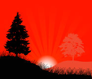Fir at red sunset. Illustration with red sunset between trees Royalty Free Stock Images