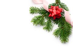 Fir and ribbon Royalty Free Stock Photography