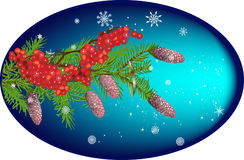 Fir and rowan tree branches on blue background Stock Images