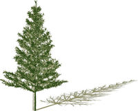 Fir with shadow stock illustration