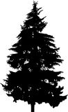 Fir silhouette. Illustration with fir silhouette isolated on white background Royalty Free Stock Images