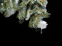 Fir, Snow, Night, Christmas Stock Photography