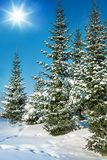 Fir after snowstorm. On sunny day in forest Royalty Free Stock Photo