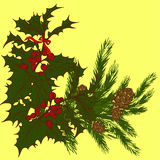 Fir sprig of holly sprig. Bouquet of fir branches with cones and sprigs of holly with berries Stock Image