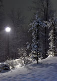 The fir and street lamp. Winter landscape Royalty Free Stock Image
