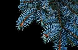 fir-tree ανασκόπηση κλάδων Στοκ Φωτογραφία