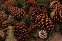 Fir-tree κώνων δασική μεγάλη καφετιά παραδοσιακή διακόσμηση υποβάθρου ακέραιων αριθμών φυσική αγροτική στοκ εικόνες
