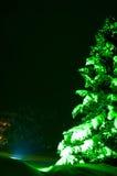 Fir-tree νύχτας Στοκ Φωτογραφία