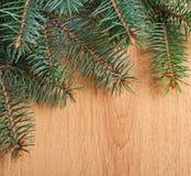 Fir-tree Χριστουγέννων κλάδος Στοκ Εικόνα