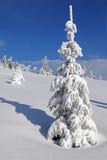 Fir-tree под снежком Стоковое Изображение