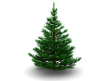 Fir tree Royalty Free Stock Images