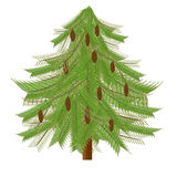 Fir-tree Stock Photo