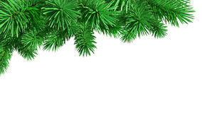Fir-tree. Isolated on white background, 3d image Stock Photo