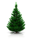 Fir tree Stock Photo