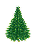 Isolated Fir Tree. Single vector Fir Tree isolated on white background Stock Image