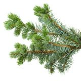 Fir tree Stock Images