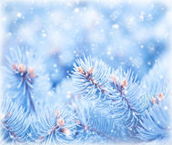 Fir tree background Royalty Free Stock Photo