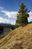Fir tree on bank. A fir tree on a railway bank in Banff Stock Image