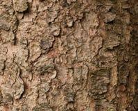 Fir Tree Bark wallpaper Stock Images