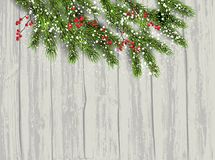 Fir tree and berries background Royalty Free Stock Photos