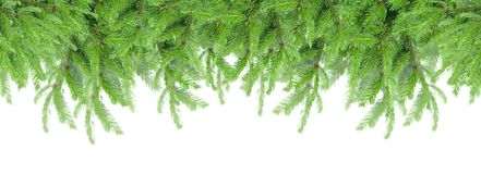 Fir tree border royalty free stock images